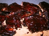 Ribs mit Bier-Glace